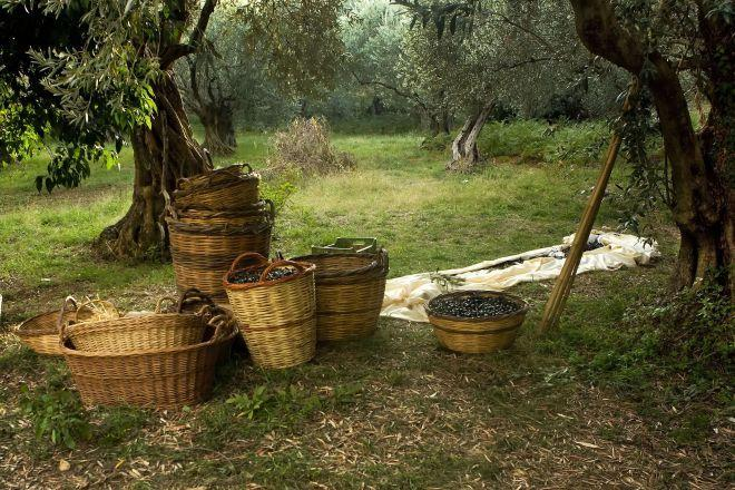 Which Country Produces The Best Olive Oil? Here's An In-Depth Analysis